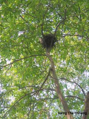 So what if I can't capture birds? Bird's nest, it is.