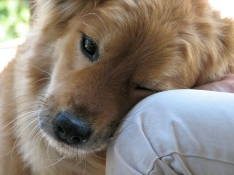 dog-nuzzle